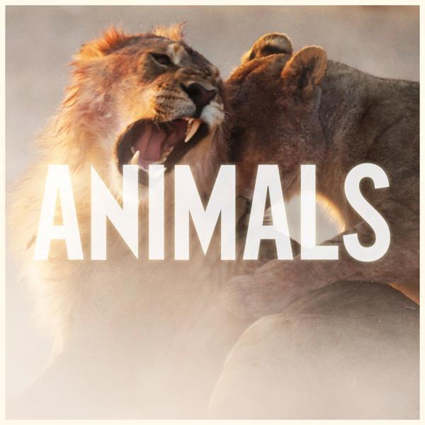 Альбом: Animals